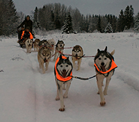 Dog Sled Ride